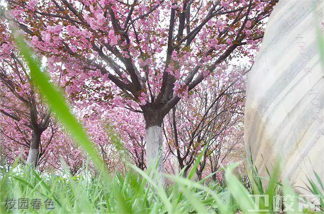陕西医科学校-校园春色