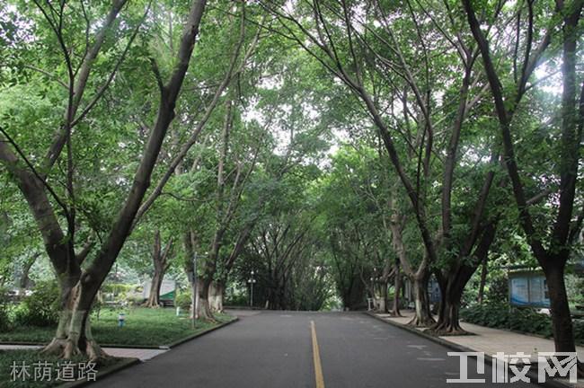 重庆知行卫生学校环境:林荫道路