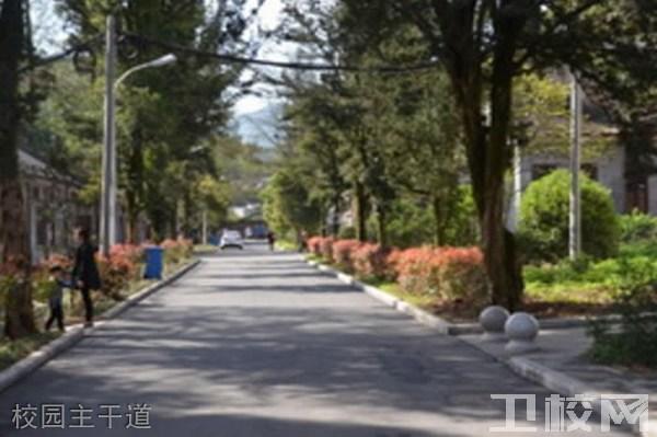 四川省档案学校校园主干道