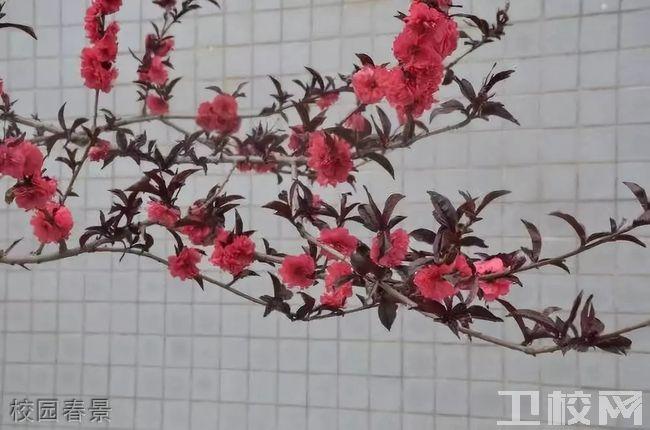 陕西医科学校校园春景